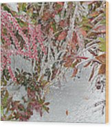 Red Berries Over Snow Wood Print