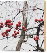 Red Berry Sprig Wood Print