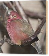 Red Billed Firefinch Wood Print
