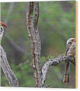 Red-billed Hornbills Wood Print