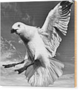Red Billed Seagull In Black And White Wood Print