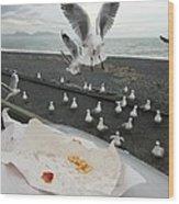 Red-billed Seagulls Wood Print