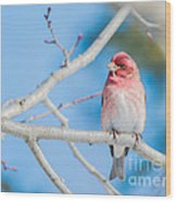 Red Bird Blue Sky Warm Sun Wood Print