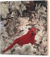 Red Bird In A Snow Covered Tree Wood Print