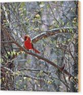 Red Bird In Dogwood Wood Print