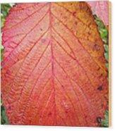 Red Blackberry Leaf Wood Print