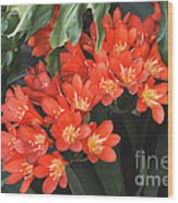 Red Blossoms At Lax Wood Print