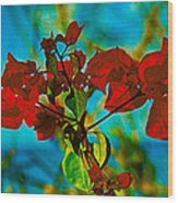Red Bougainvillea Wood Print
