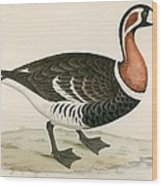 Red Breasted Goose Wood Print