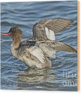 Red-breasted Merganser Wood Print