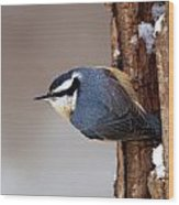 Red-breasted Nuthatch Wood Print