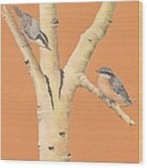 Red-breasted Nuthatches On Aspen Wood Print