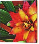 Red Bromeliad Wood Print