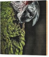 Red Browed Amazon Parrot Wood Print