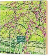 Red Bud Cascade Wood Print