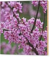 Red Buds Wood Print