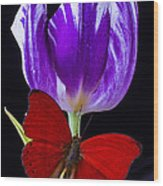 Red Butterfly And Purple Tulip Wood Print