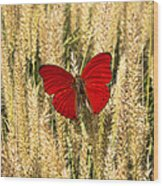 Red Butterfly In The Tall Weeds Wood Print