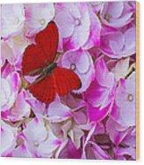 Red Butterfly On Hydrangea Wood Print