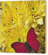 Red Butterfly On Poms Wood Print