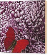Red Butterfly On Red Mum Wood Print