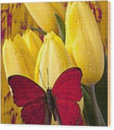 Red Butterfly Resting On Tulips Wood Print