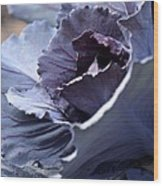 Red Cabbage Abstract Wood Print