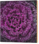 Red Cabbage Wood Print