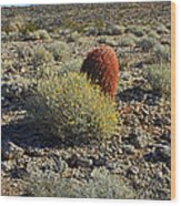 Red Cactus Wood Print