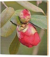 Red Camelia Buds Wood Print
