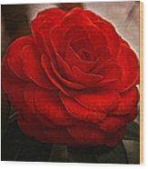 Red Camelia Wood Print