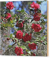 Red Camellias And Blue Sky Wood Print