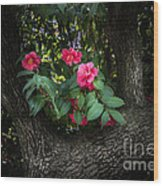 Red Camellias Wood Print