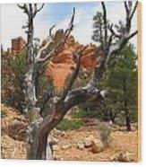 Red Canyon Tree And Rocks Wood Print