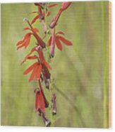Red Cardinal Flower Wood Print