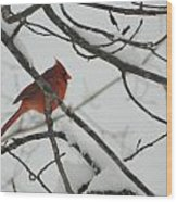 Red Cardinal On Snow Covered Tree Limb Wood Print