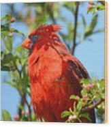 Red Cardinal Pink Blooms Wood Print