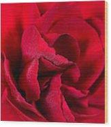 Red Carnation Wood Print
