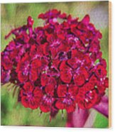 Red Carnations Wood Print by Omaste Witkowski