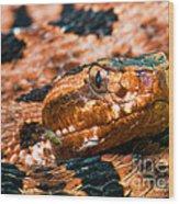 Red Carolina Pygmy Rattlesnake Wood Print