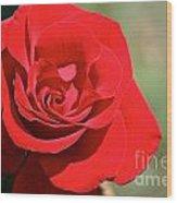 Red Carpet Rose Wood Print