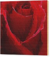 Red Charmer Wood Print