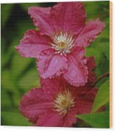 Red Clematis Flowers Wood Print