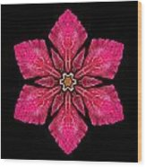 Red Clematis I Flower Mandala Wood Print