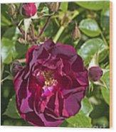 Red Climbing Rose Wood Print