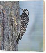 Red-cockaded Woodpecker Wood Print