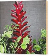 Red Cone Ginger - No 1 Wood Print