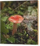 Red Coral Mushroom Wood Print