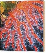 Red Coral Wood Print by Roberto Galli della Loggia