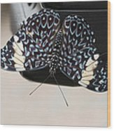 Red Cracker Butterfly Wood Print